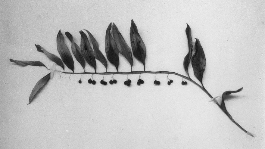 Jochen Lempert, Botanical Box. Cortesía del artista y projecte SD, para la exposición 'Botánicas'.