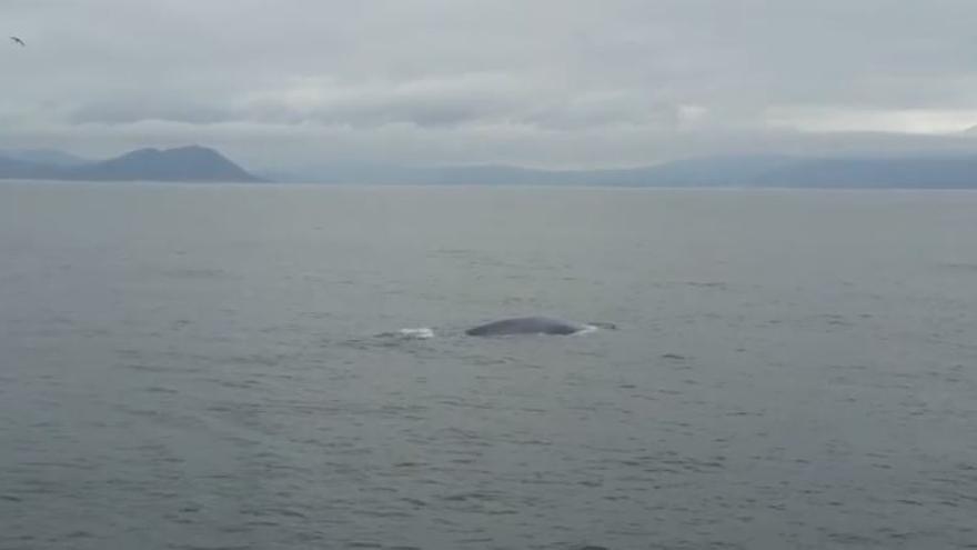 La ballena azul avistada en la Ría de Muros