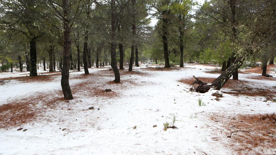 Nieve en Los Llanos de La Pez