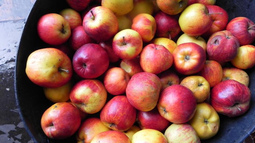 Manzanas de La Palma con las que se elabora la sidra O'Daly.
