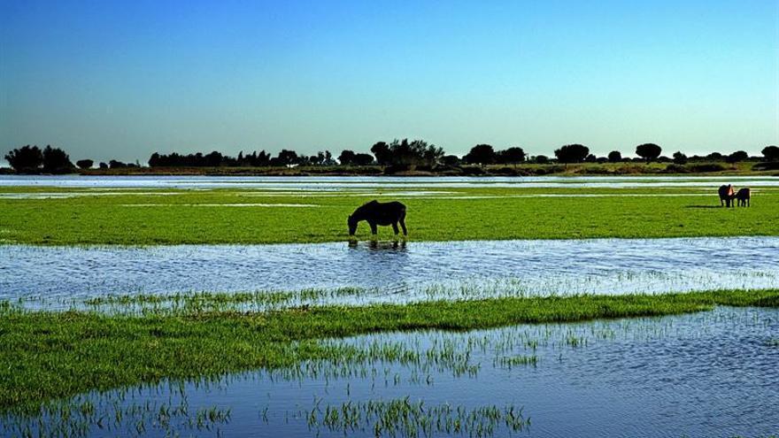 WWF y Ecologistas en Acción, en contra de los nuevos PORN y PRUG de Doñana
