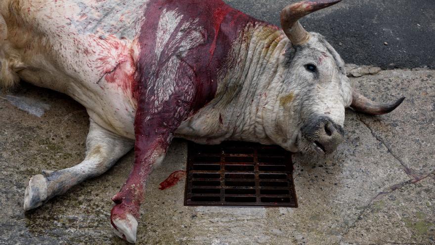 Un toro tras la lidia en la trastienda de la plaza de toros de Azpeitia (Gipuzkoa). Foto: Askekintza/Tras Los Muros