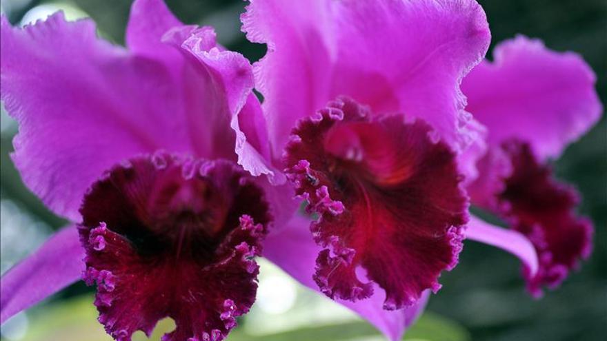 Colombia es el país con mayor variedad de orquídeas, con 4.270 especies