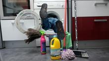 Día 46 en estado de alarma: la limpieza