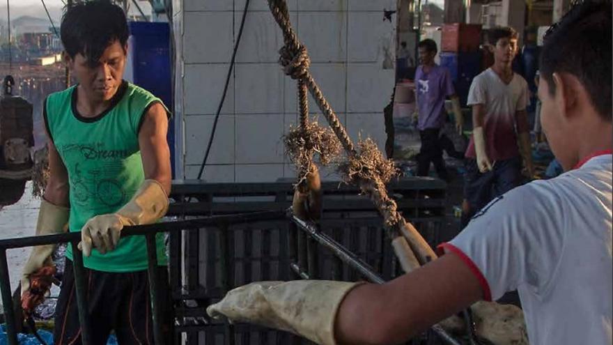Las tripulaciones de pesca descargan pescado de un buque en el puerto pesquero público en Ranong, Tailandia.