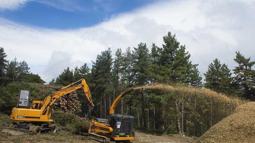Un proyecto piloto realiza aprovechamiento forestal en Punta Barrena (Roncal) para obtener astilla para biomasa