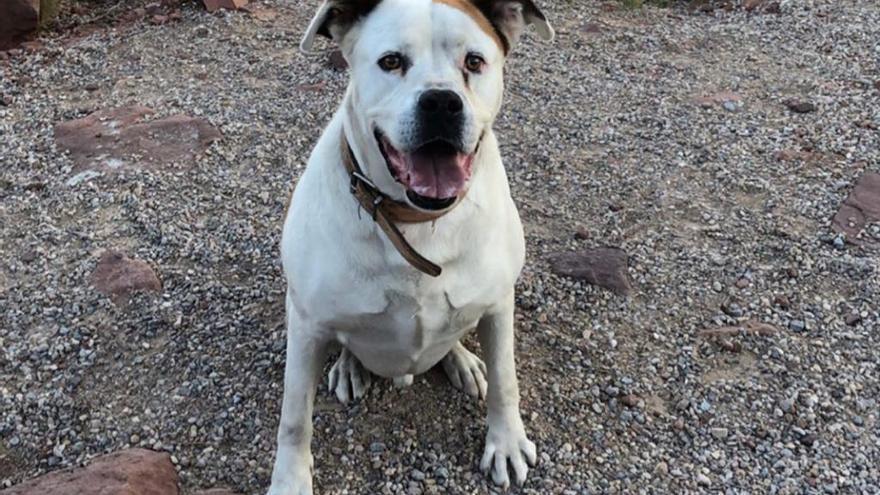 El fallecido perro 'Marley' en una foto cedida por la familia.