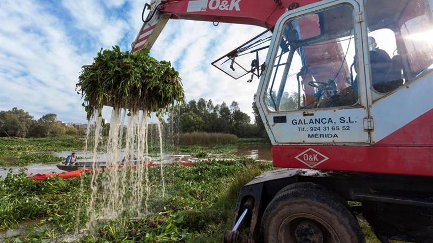 Extremadura pide ayuda al Ejército para retirar el camalote del Guadiana