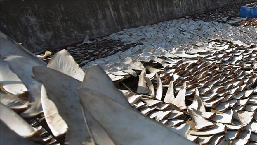 Incautan más de 100.000 aletas de tiburones en una ciudad pesquera de Ecuador