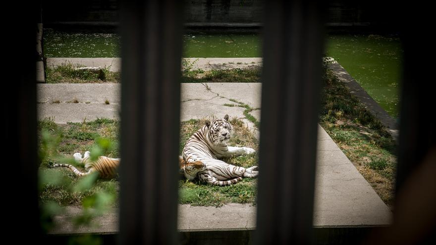 Animales cautivos en el Zoo Aquarium de Madrid. Foto: Ruth Montiel Arias