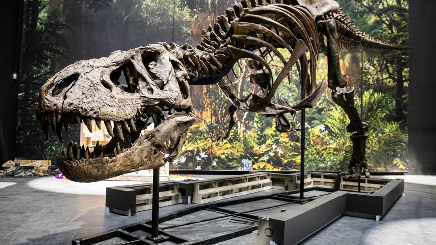 La vida solo tardó 700.000 años en recuperarse tras el fin de los dinosaurios