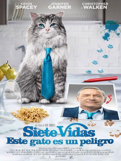 2016-9-17-siete-vidas-este-gato-es-un-peligro-en-madrid