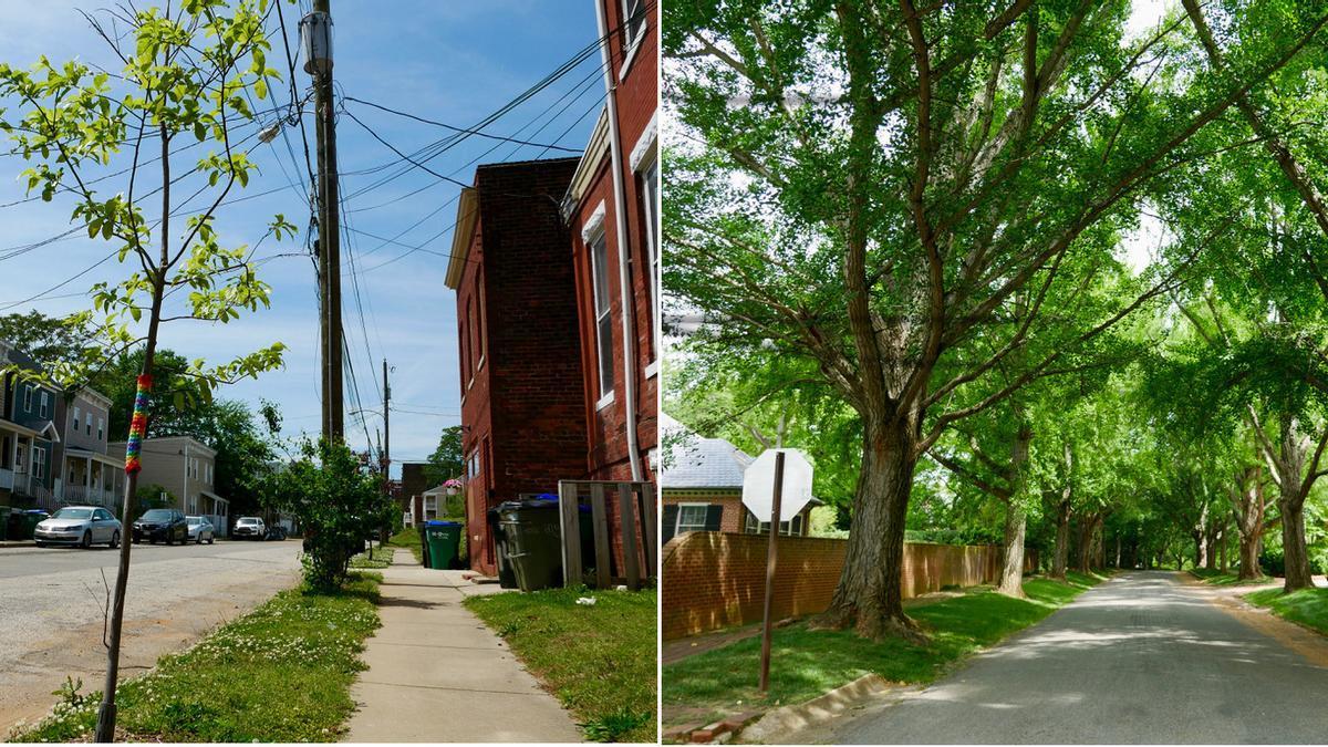 A la izquierda, un árbol recién plantado por los vecinos del barrio pobre de Carver. A la derecha, avenida arbolada en Windsor Farms