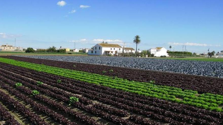 Espaldarazo a la protección del territorio: el TSJ tumba el recurso de una gran promotora contra el plan de L'Horta de València