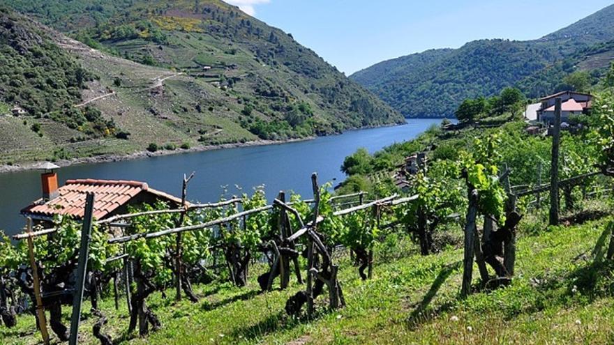Cinco denominaciones de origen de vinos gallegos que van más allá del albariño
