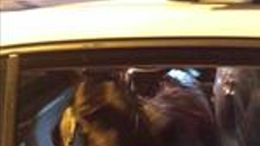 La cabra, en el coche de la Policía Local de Santa Cruz. (TWITTER POLICÍA LOCAL SANTA CRUZ)