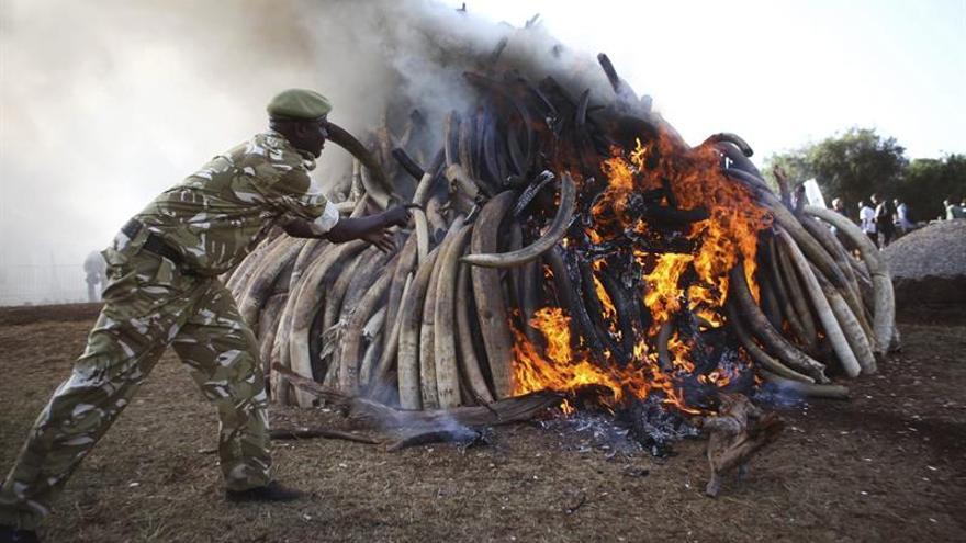 Varios guardabosques matan a tres supuestos cazadores furtivos en una reserva de Kenia