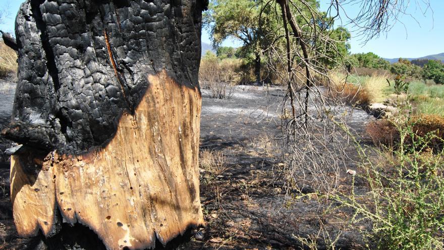 Incendio de Sierra de Gata, junto a Acebo / JCD