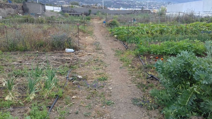 Huerto municipal situado en el Camino de los Choriceros.