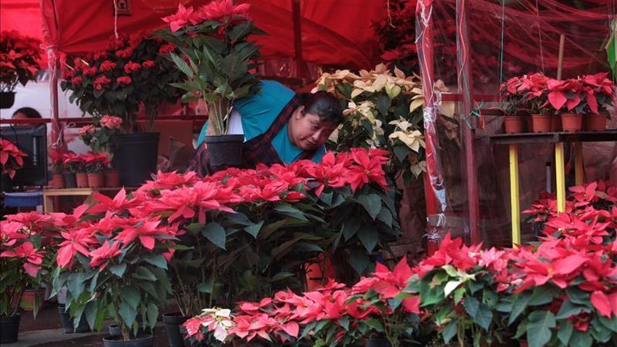 La flor de Nochebuena, la contribución mexicana a la Navidad