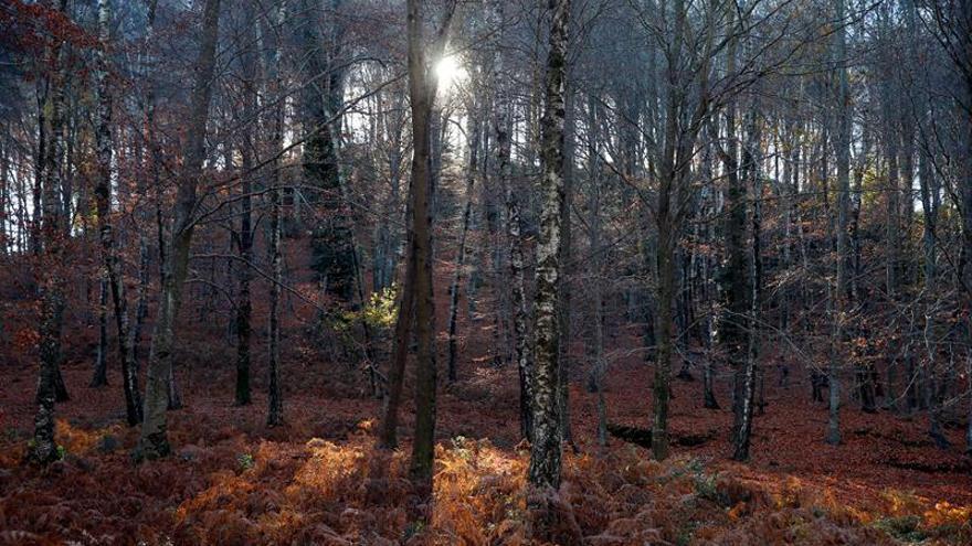 La superficie forestal crece a un ritmo de 180.000 hectáreas por año