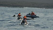 Motos de agua intimidan a una colonia de calderones en el sur de Tenerife, en una imagen de la semana pasada