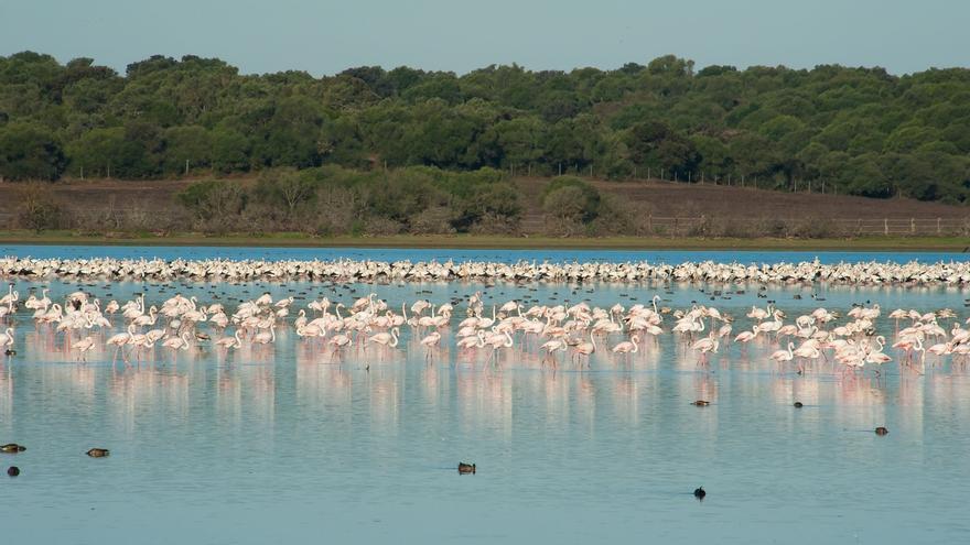 Las Marismas del Guadalquivir, en peligro de desaparecer como Área Importante para las Aves, según SEO/Birdlife