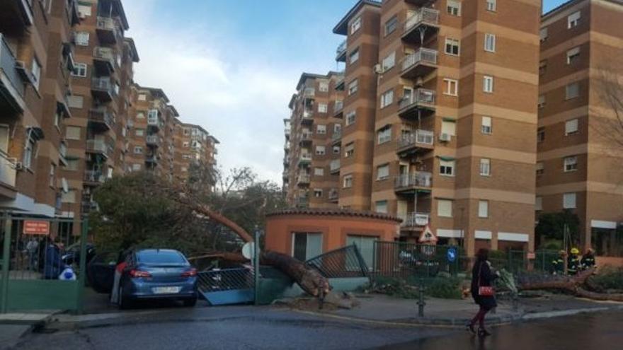 Árbol derribado por el viento en Toledo