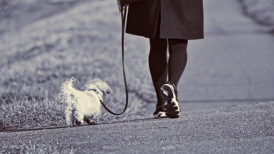 Perro paseando Pixabay
