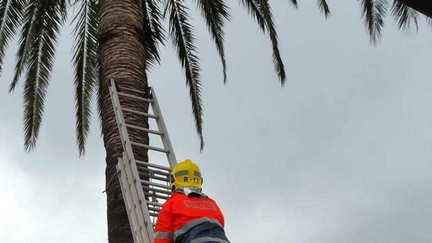 Un momento del rescate. Foto: BOMBEROS LA PALMA.