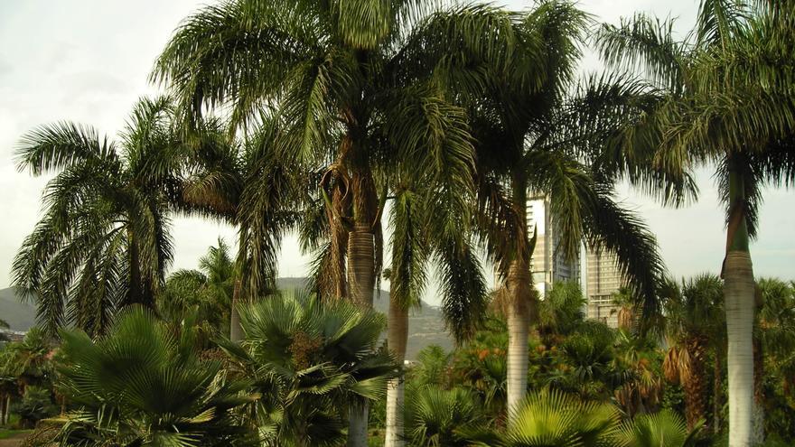 Imagen parcial del Palmetum de Santa Cruz de Tenerife.
