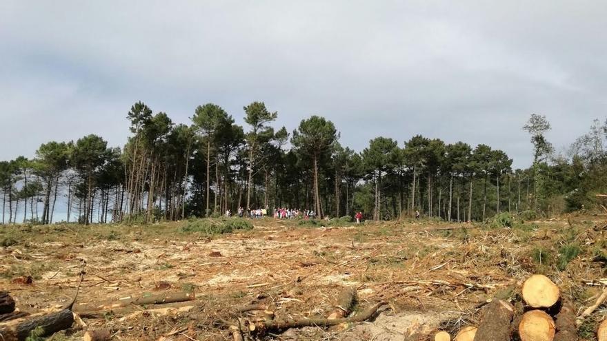 Equo pide la paralización total de la tala del bosque de Loredo