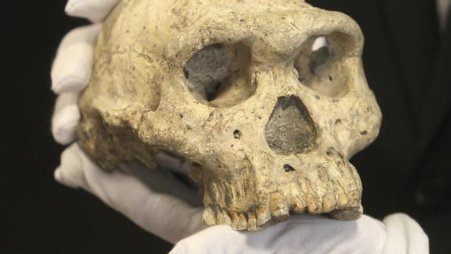 Los homínidos pudieron entrar en Europa hace 900.000 años por la Península Ibérica
