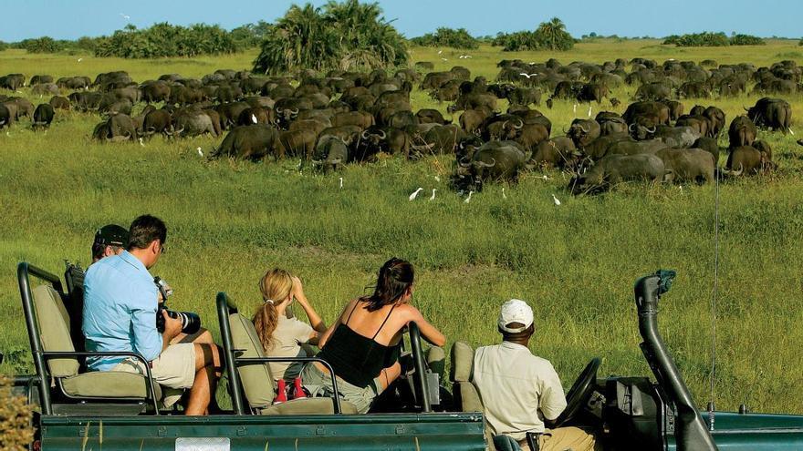 Varios turistas observan, desde su vehículo, a una enorme manada de búfalos negros. TURISMO DE BOTSWANA