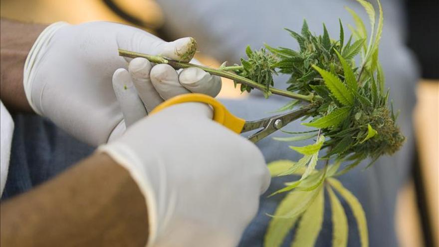 El mercado legal del cannabis existe en España, aunque se conoce poco de él.