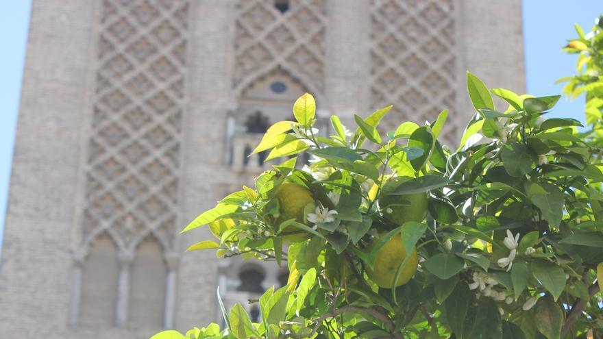 Naranjo frente a Giralda