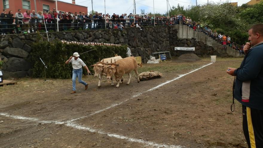 Imagen de archivo de una prueba de arrastre en San Isidro (Breña Alta).