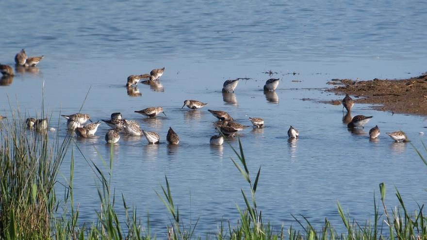 Ekoetxea Urdaibai celebrará este domingo el Día Mundial de las Aves con actividades para todas las edades