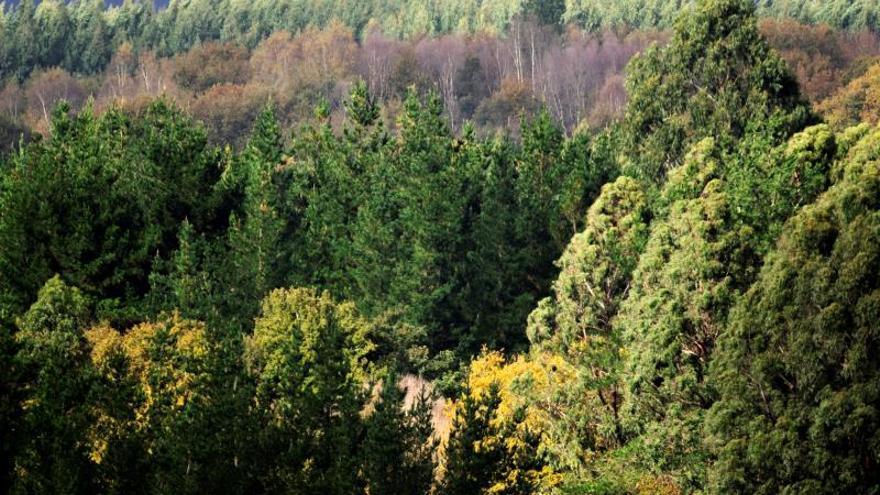 La COP25 afronta la cuarta jornada con la vista puesta en los sectores agrícola y forestal