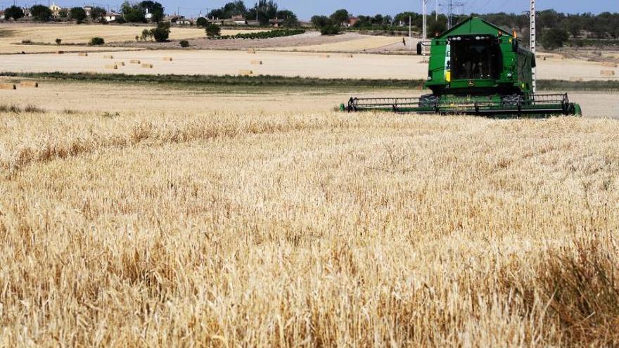 La ONU debate cambios en la dieta y el uso del suelo para salvar el planeta