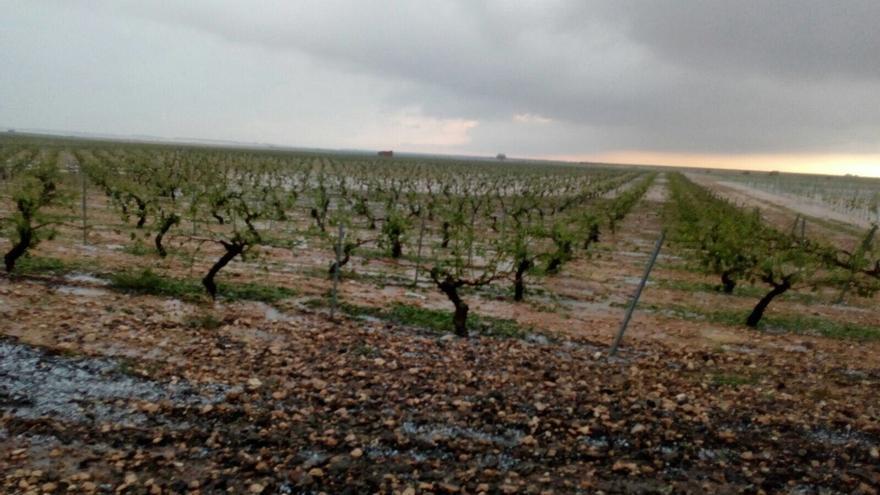 UPA afirma que las tormentas han afectado al 80% de las viñas de la Manchuela albaceteña y conquense