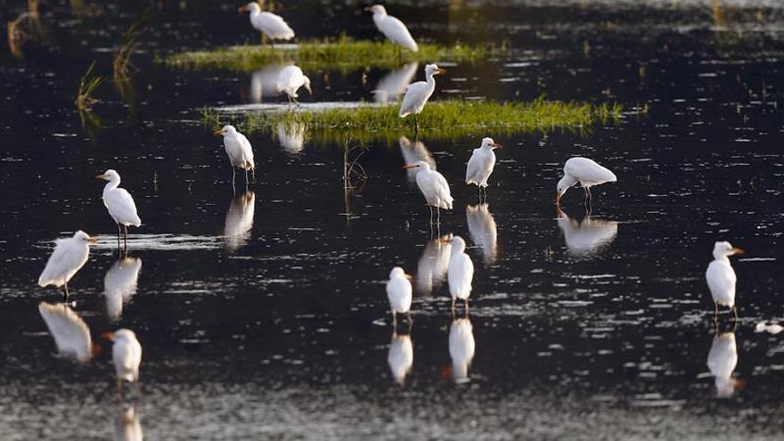 BirdLife apela a la complicidad ciudadana con las aves en su Día Mundial