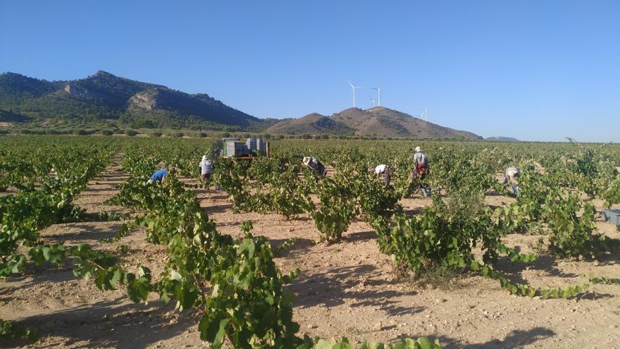 El Ministerio homologa los contratos tipo de compraventa de uva con destino a su transformación y de vino