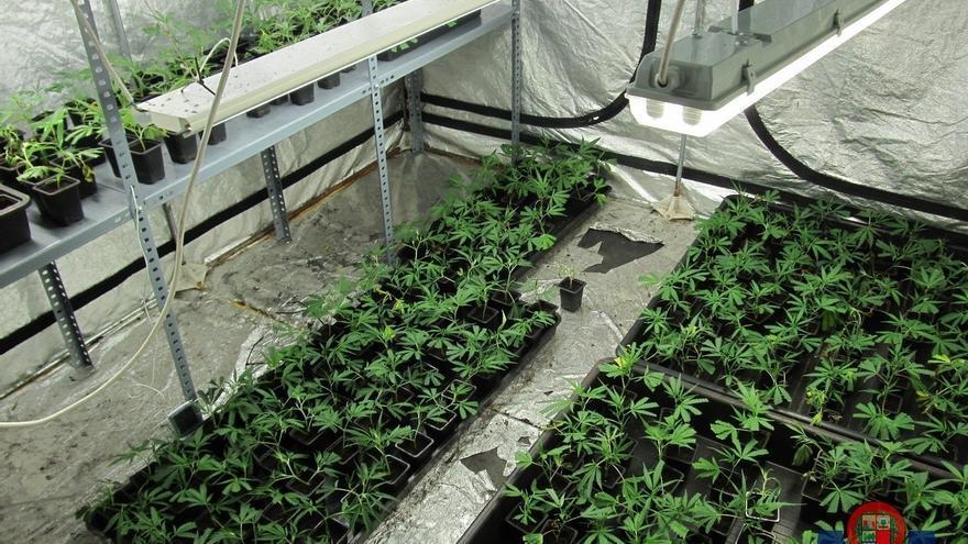 Desmanteladas dos plantaciones de marihuana en Barakaldo, con más de 1.500 plantas