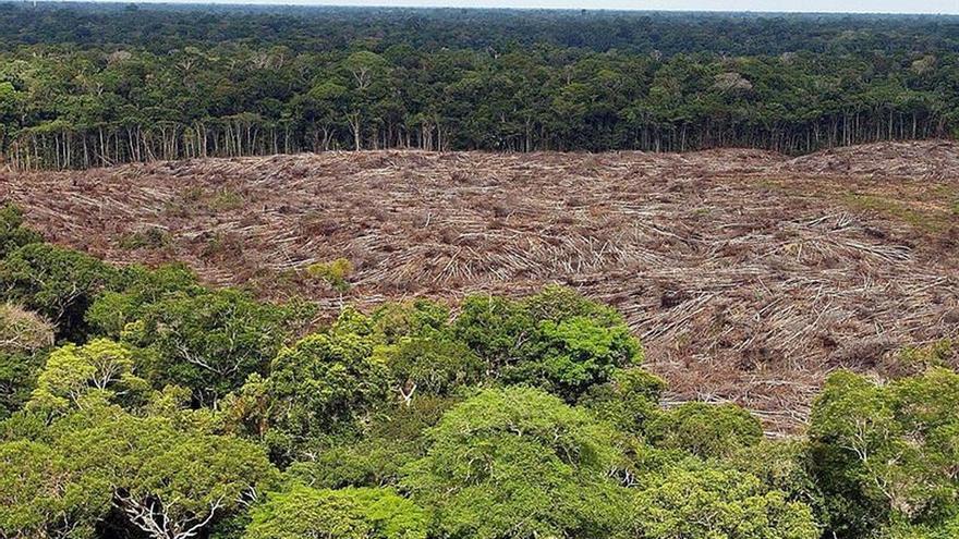 Advierten que la deforestación de la Amazonía se acerca a un punto de no retorno