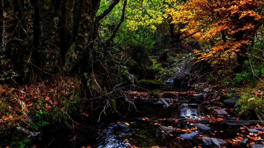 Los bosques de seis países se unen al Bien de Patrimonio Mundial 'Hayedos europeos'