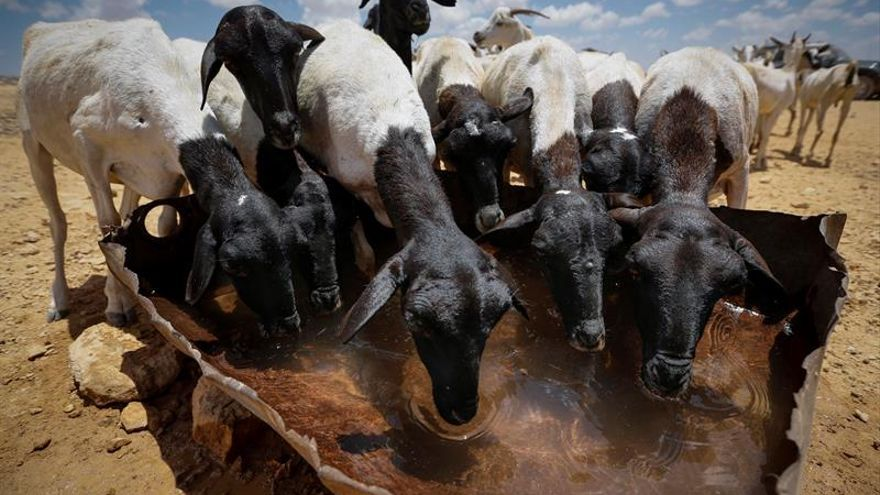 En busca de la lluvia que salve a Somalia
