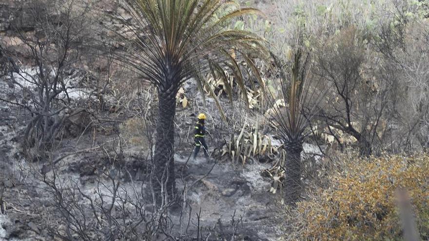 Labores de extinción de un pequeño conato en la localidad de Tasarte, donde el sábado se declaró un incendio forestal que obligó a desalojar a sus vecinos. EFE/ Elvira Urquijo A.