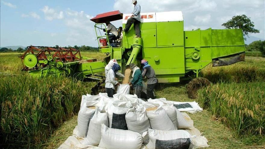 Surinam acogerá una reunión sobre la seguridad alimenticia en el Caribe