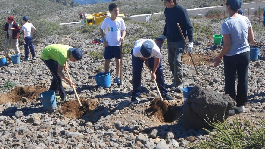 En la imagen, primera repoblación realizada este año, poco antes de las fiestas de primeros de mayo, por alumnos  del colegio de San Antonio de Breña Baja. Foto: José Eulalio.